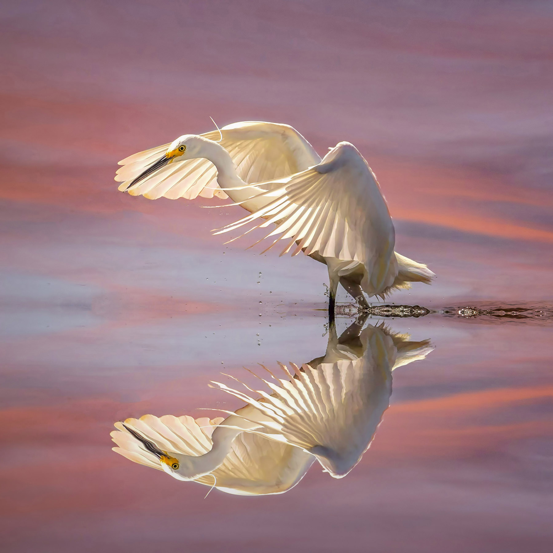 Reflection by Jan Robinson
