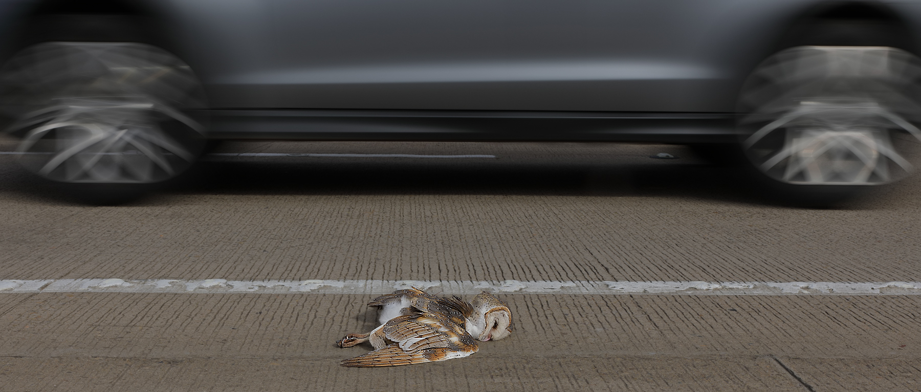 Road Kill by Con Boekel