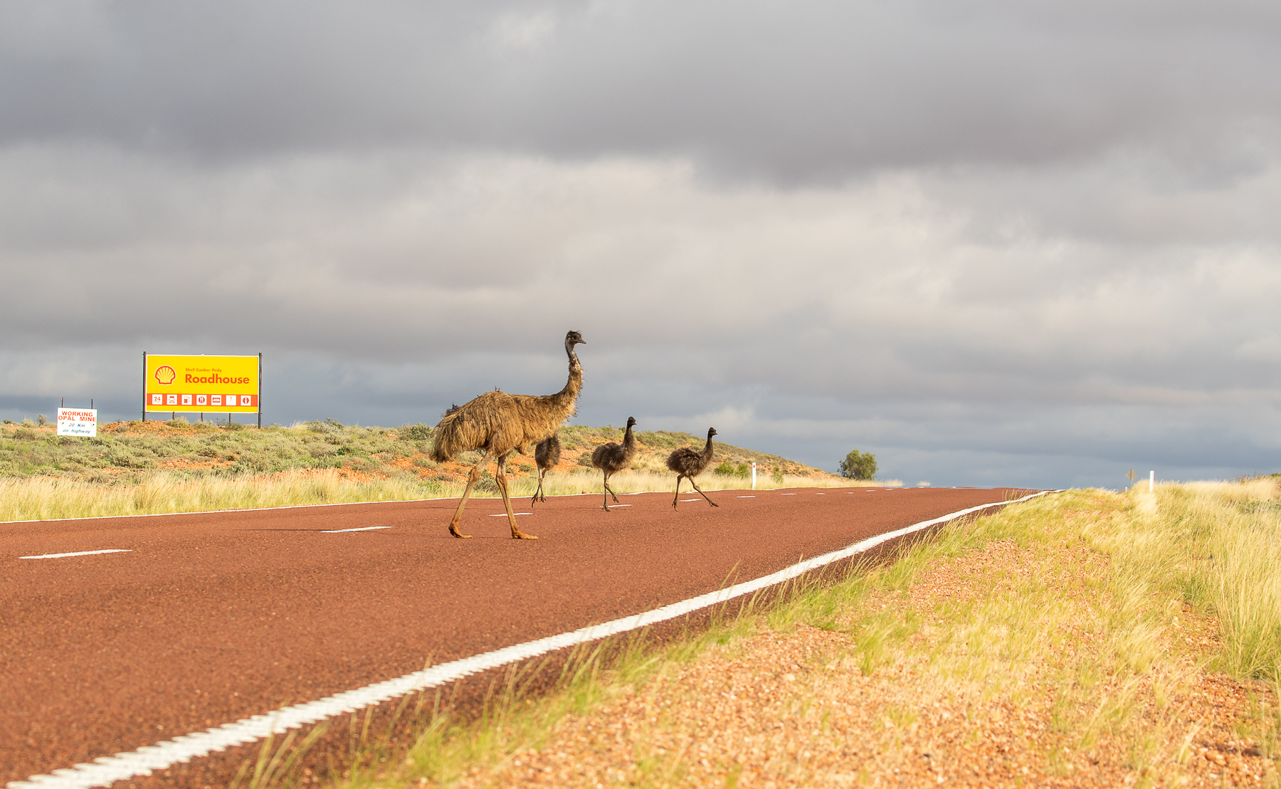Emu Road by Cameron Candy