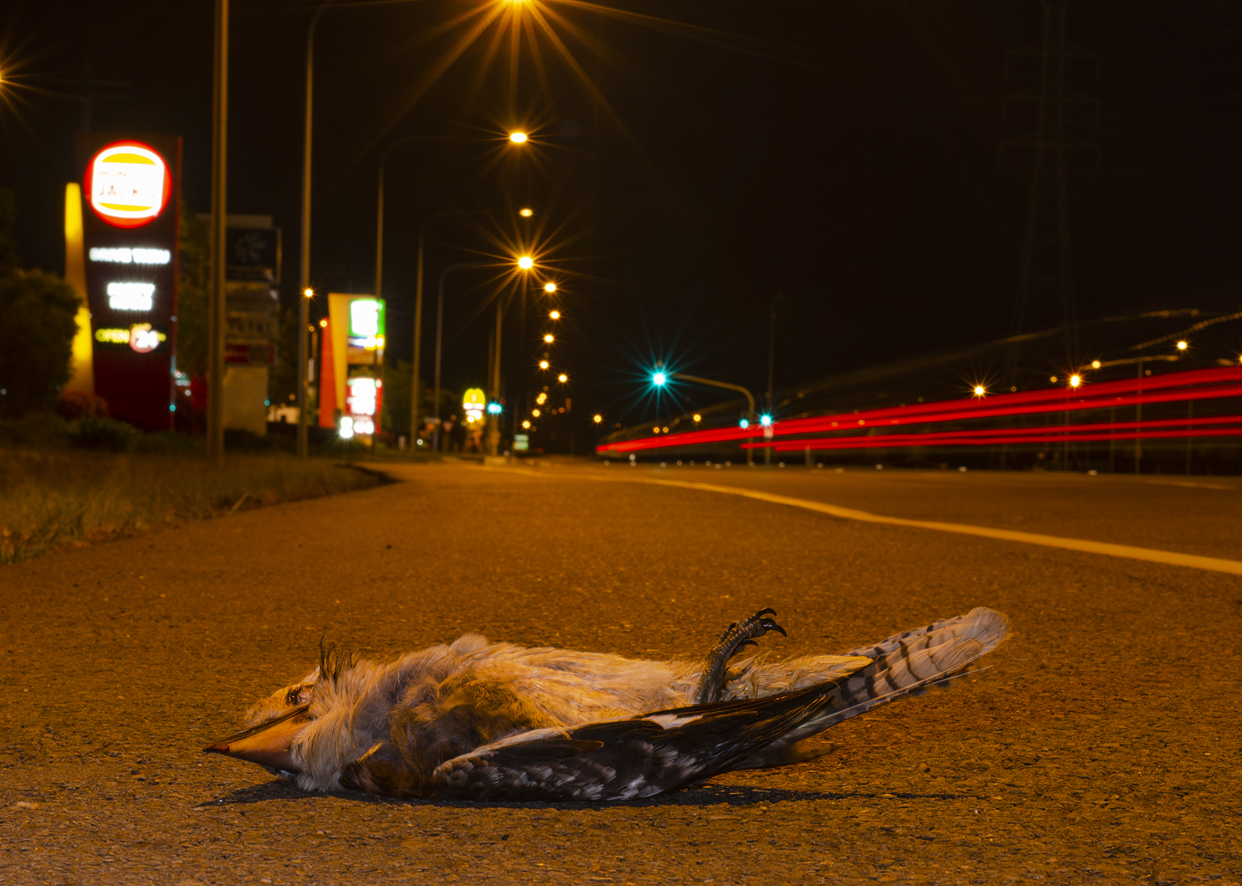 Iconic Roadkill by Heyn De Kock