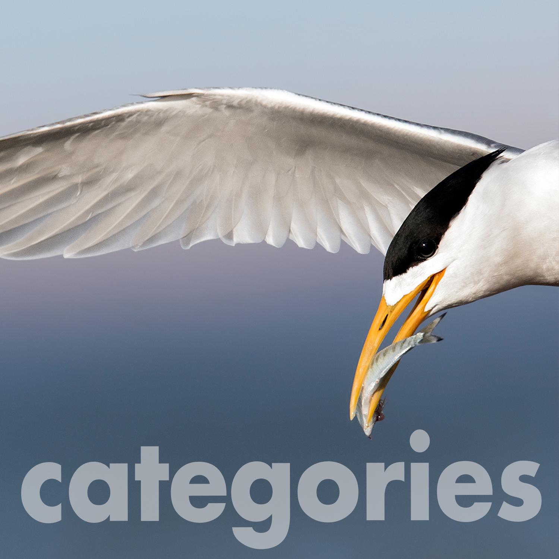 categories 1.jpg