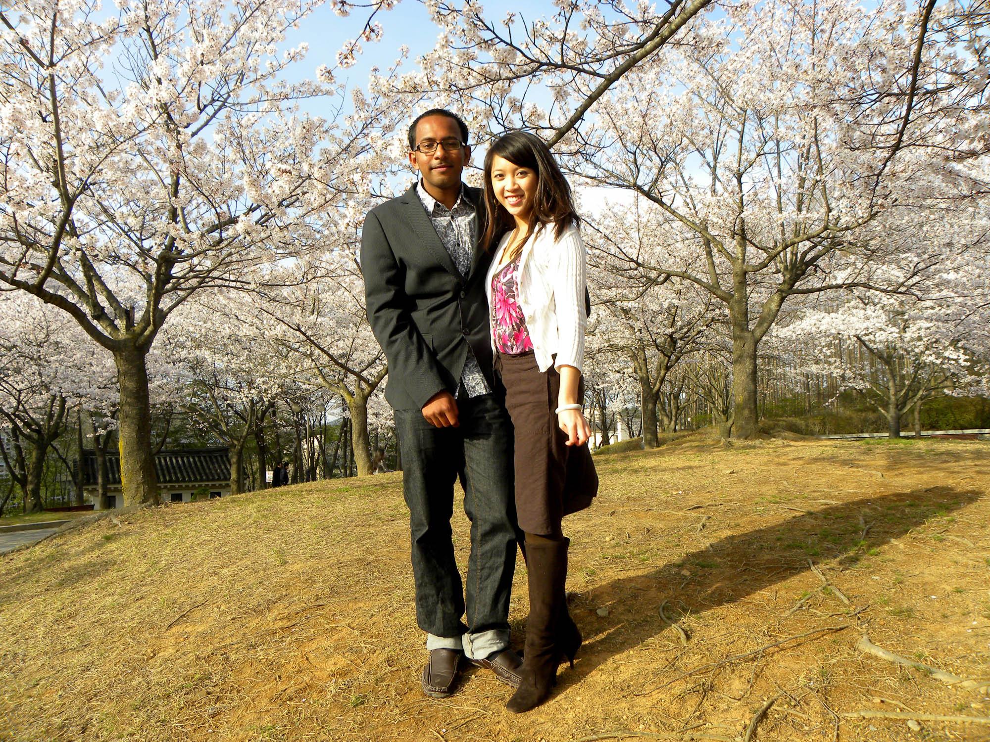 cherry-blossoms-5.jpg
