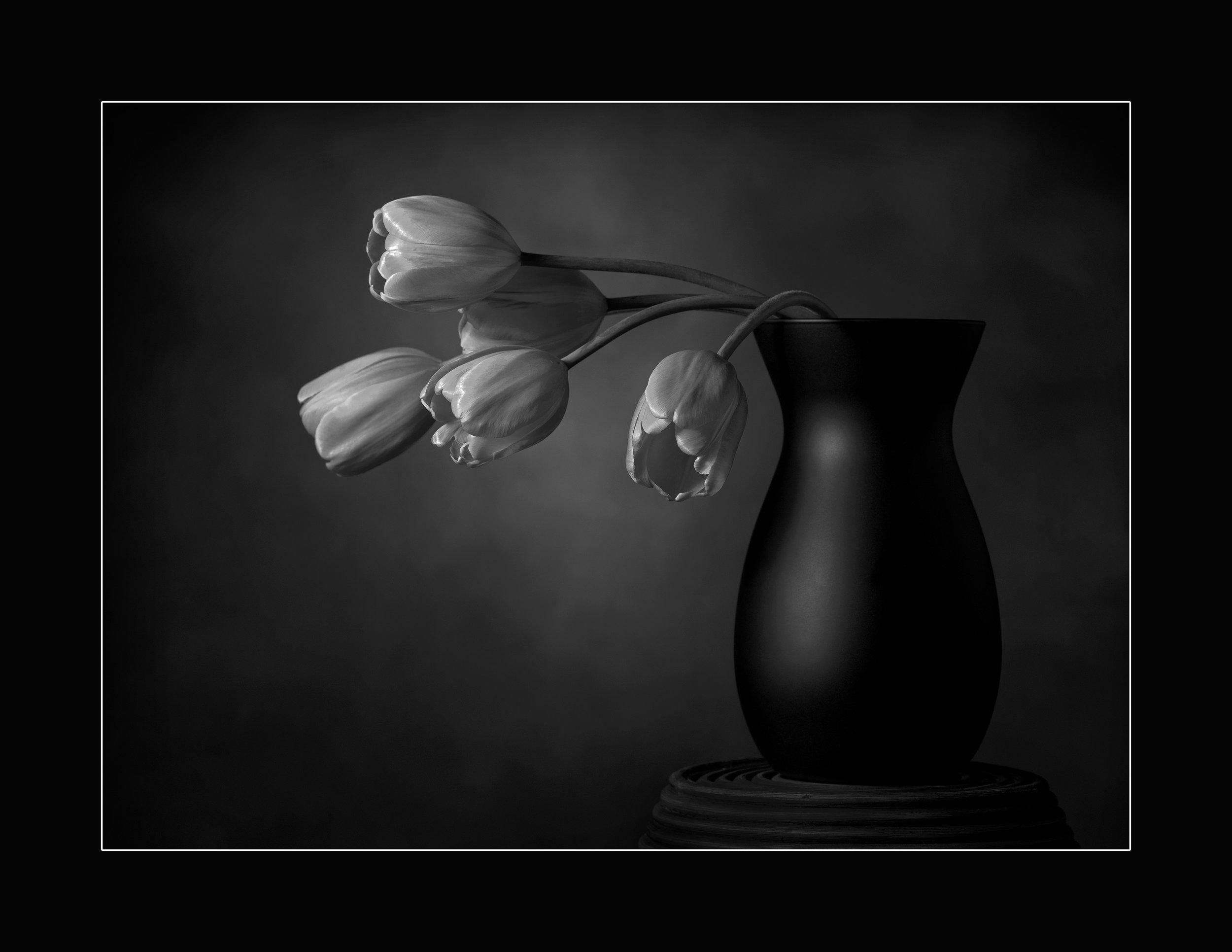 Tulips_SQUARE.jpg