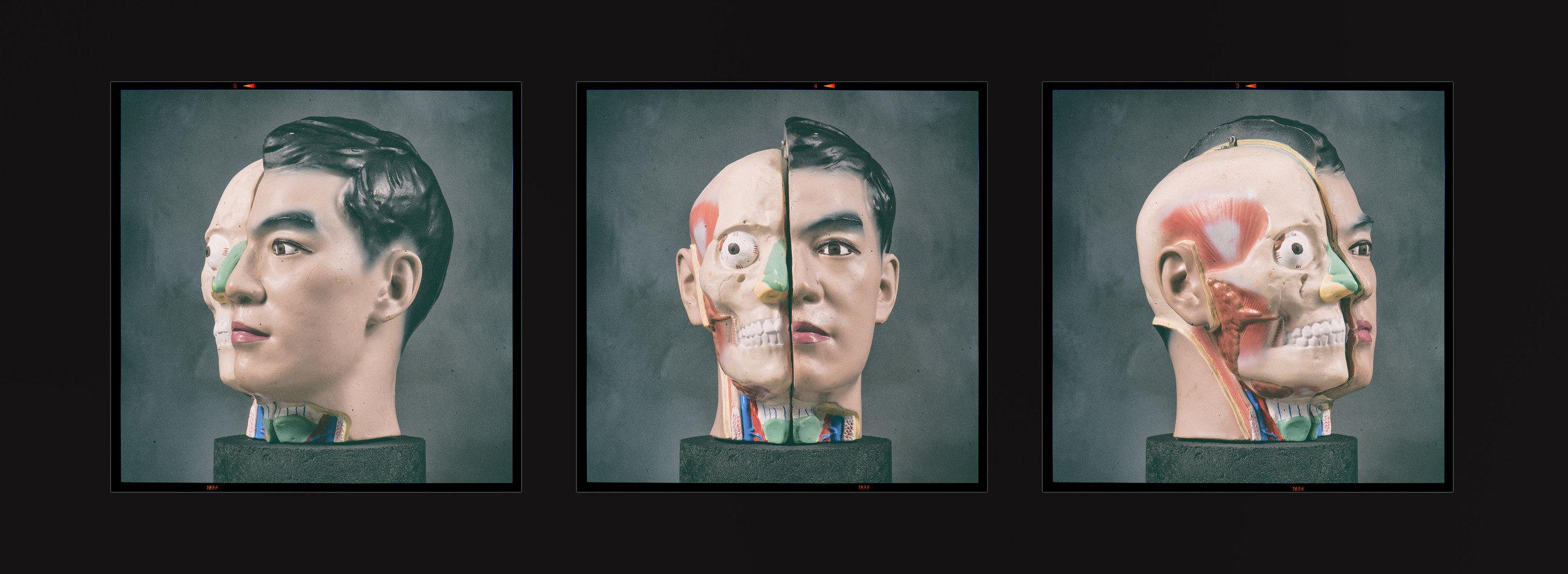 Medical_Head_Triptych_PORT.jpg