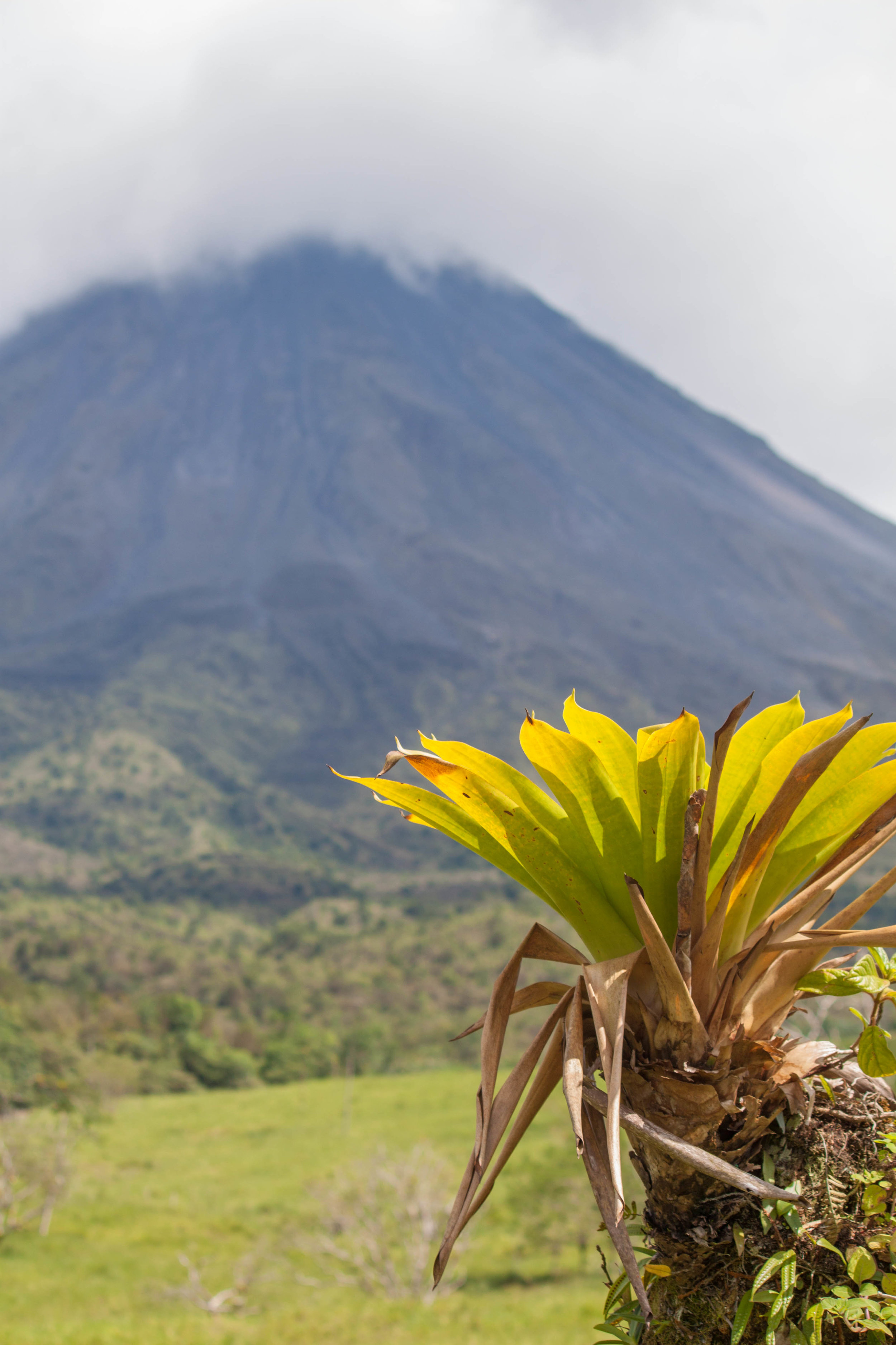 arenal palm - arenal volcano, costa rica