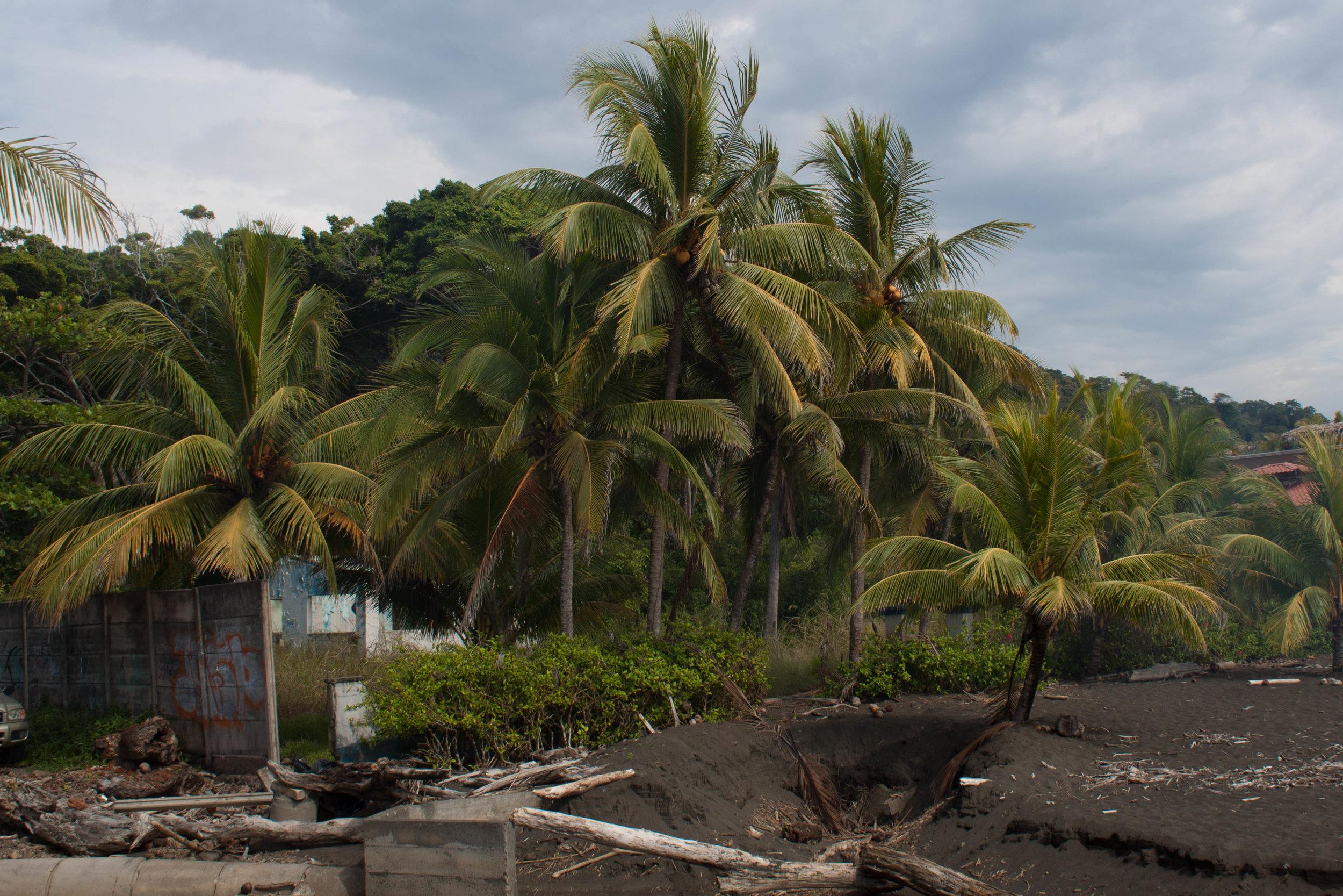 black sand palms - playa hermosa, costa rica