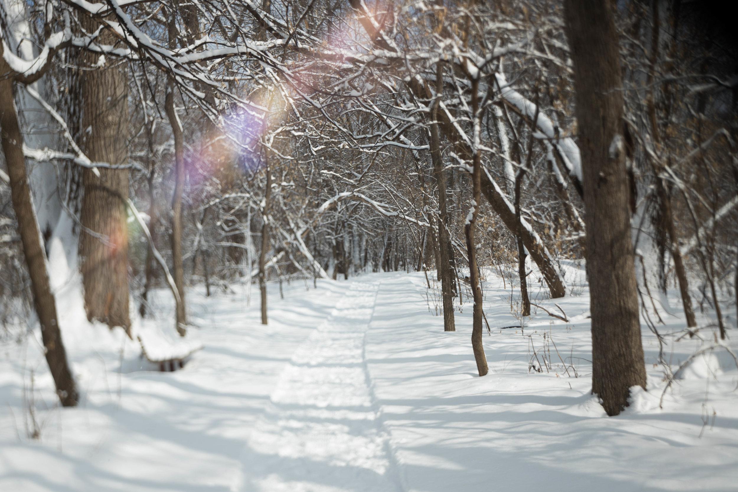 freelensed-hike-minnesota-winter