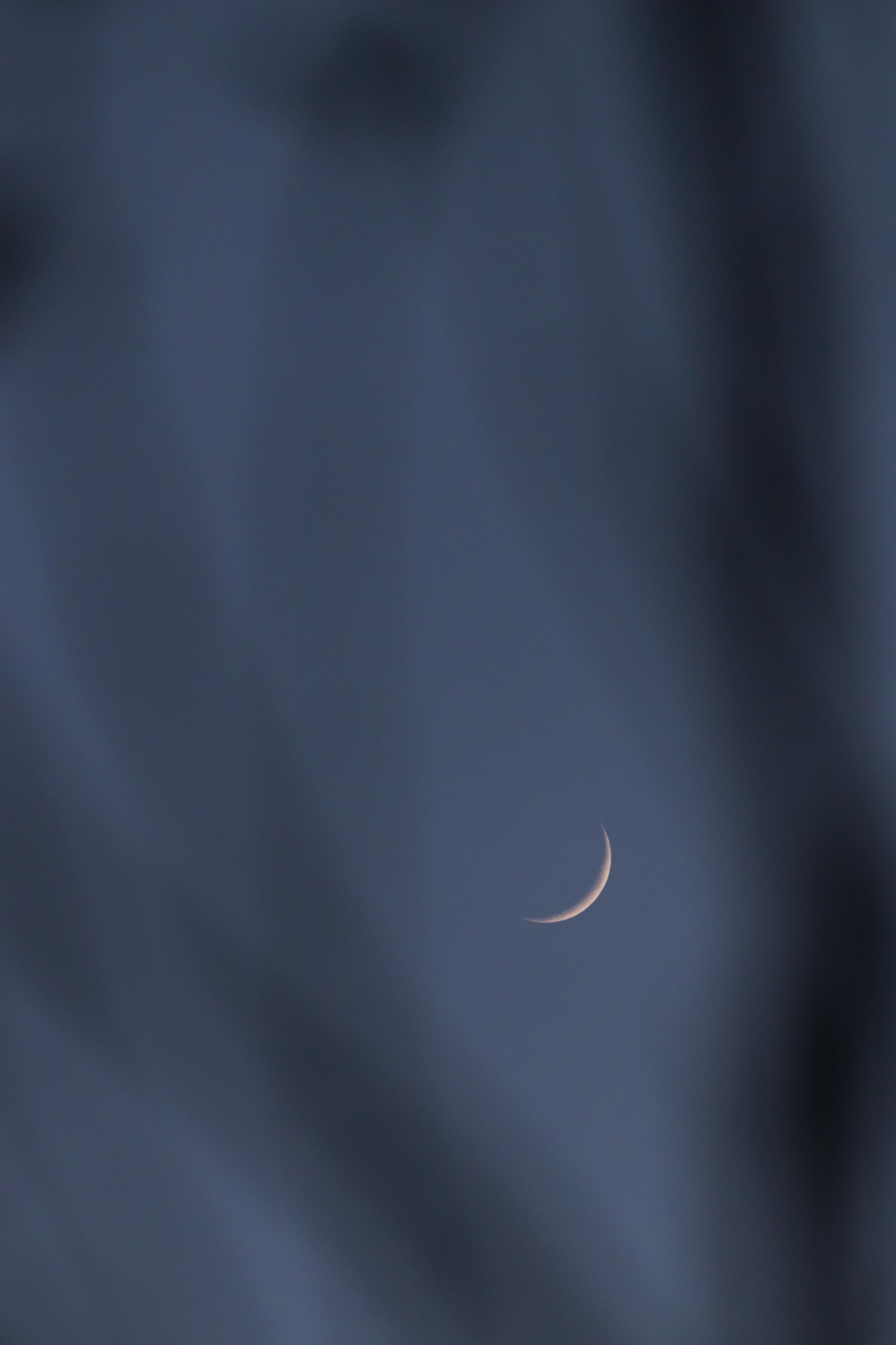 crescent moon in tree - minneapolis