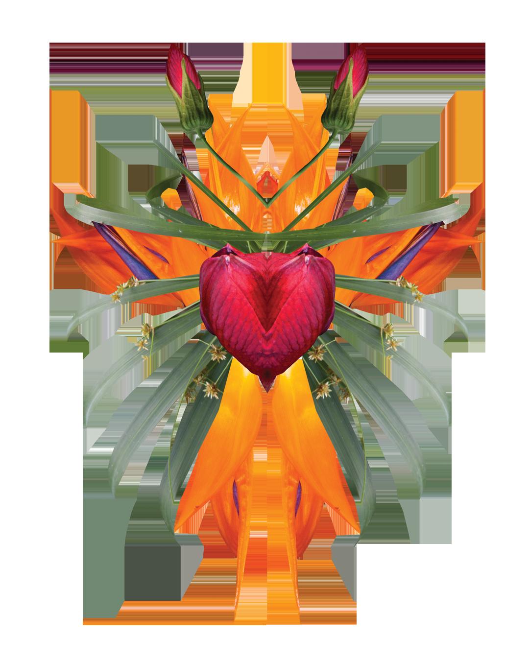 VAWK_Graphics2018_Heart.png