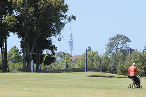 Sky Tower from Akarana.jpg