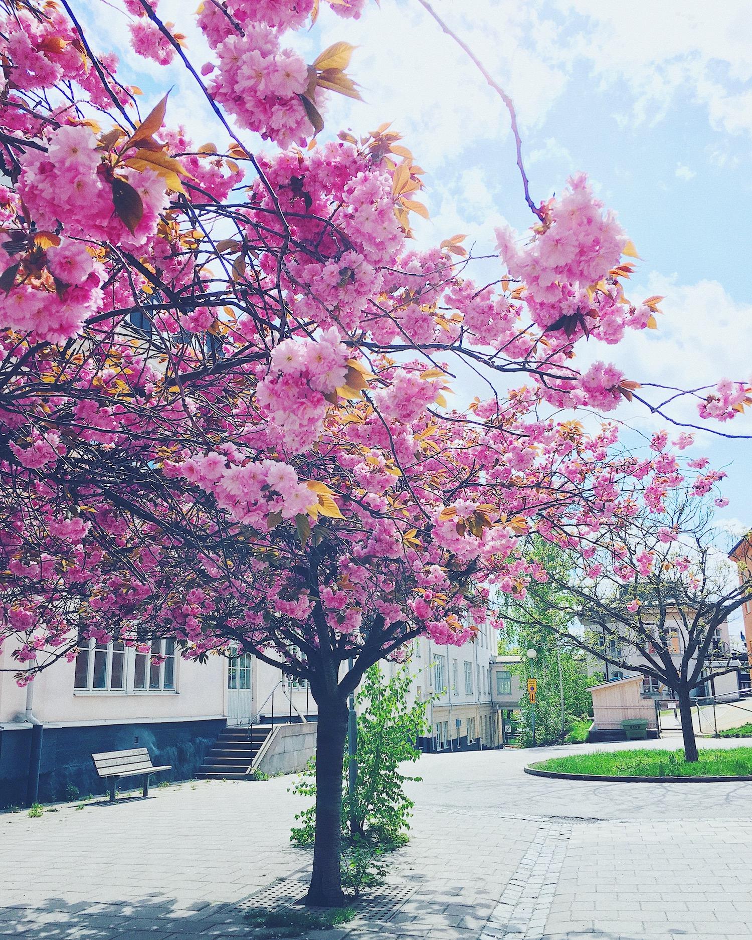Spring in Soderholm