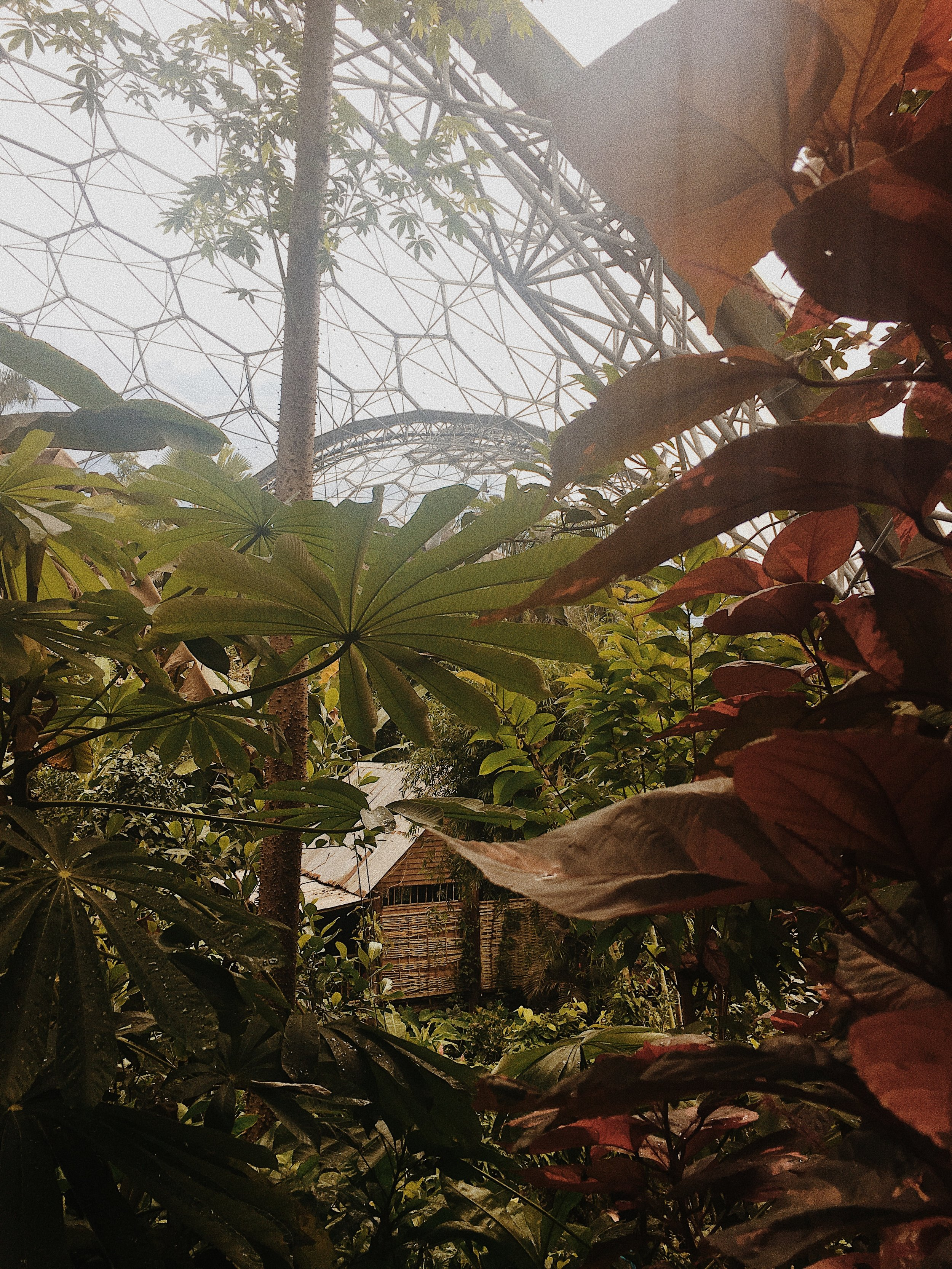 The Rainforest Bio Dome at The Eden Project