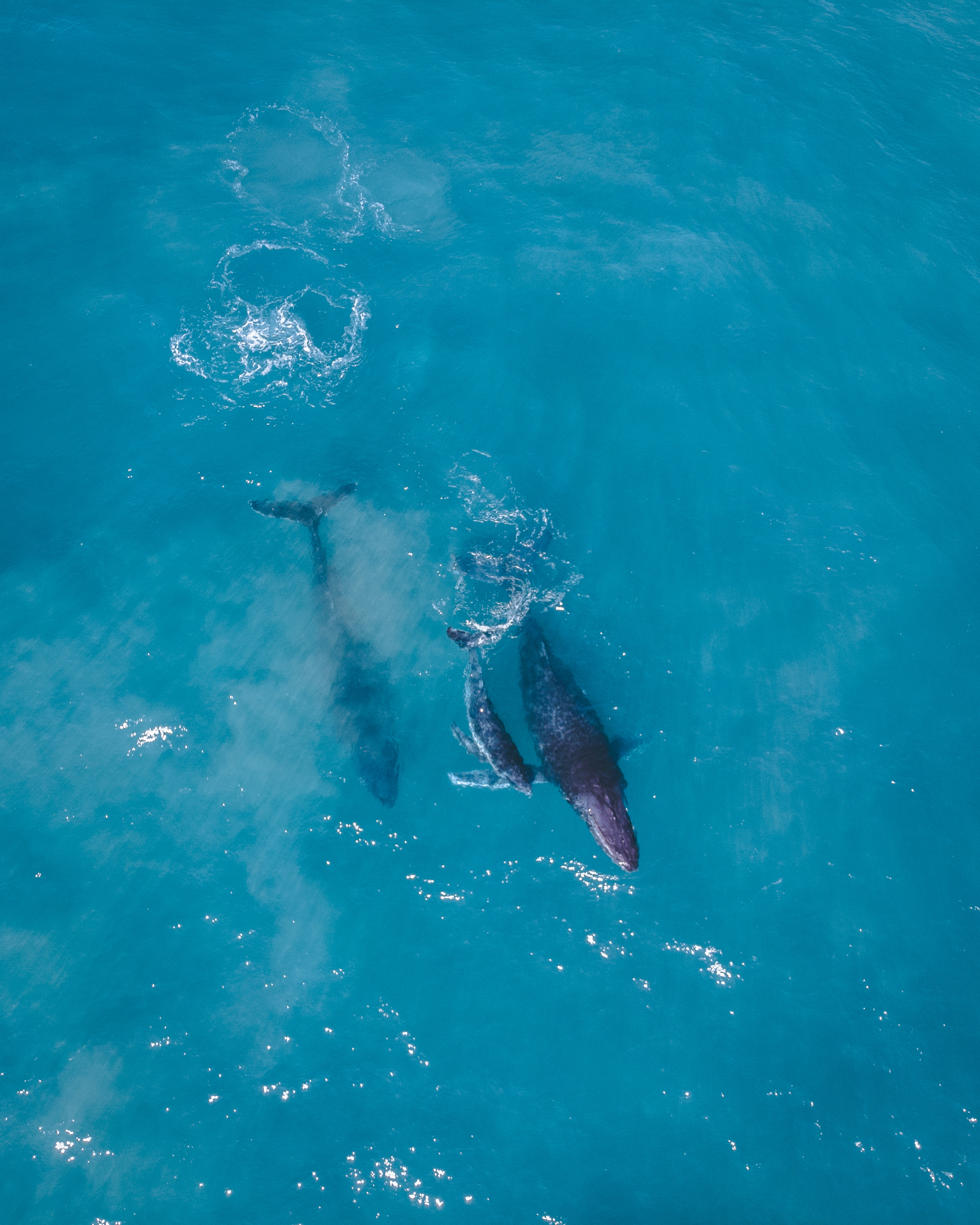 fraserwhales.jpg