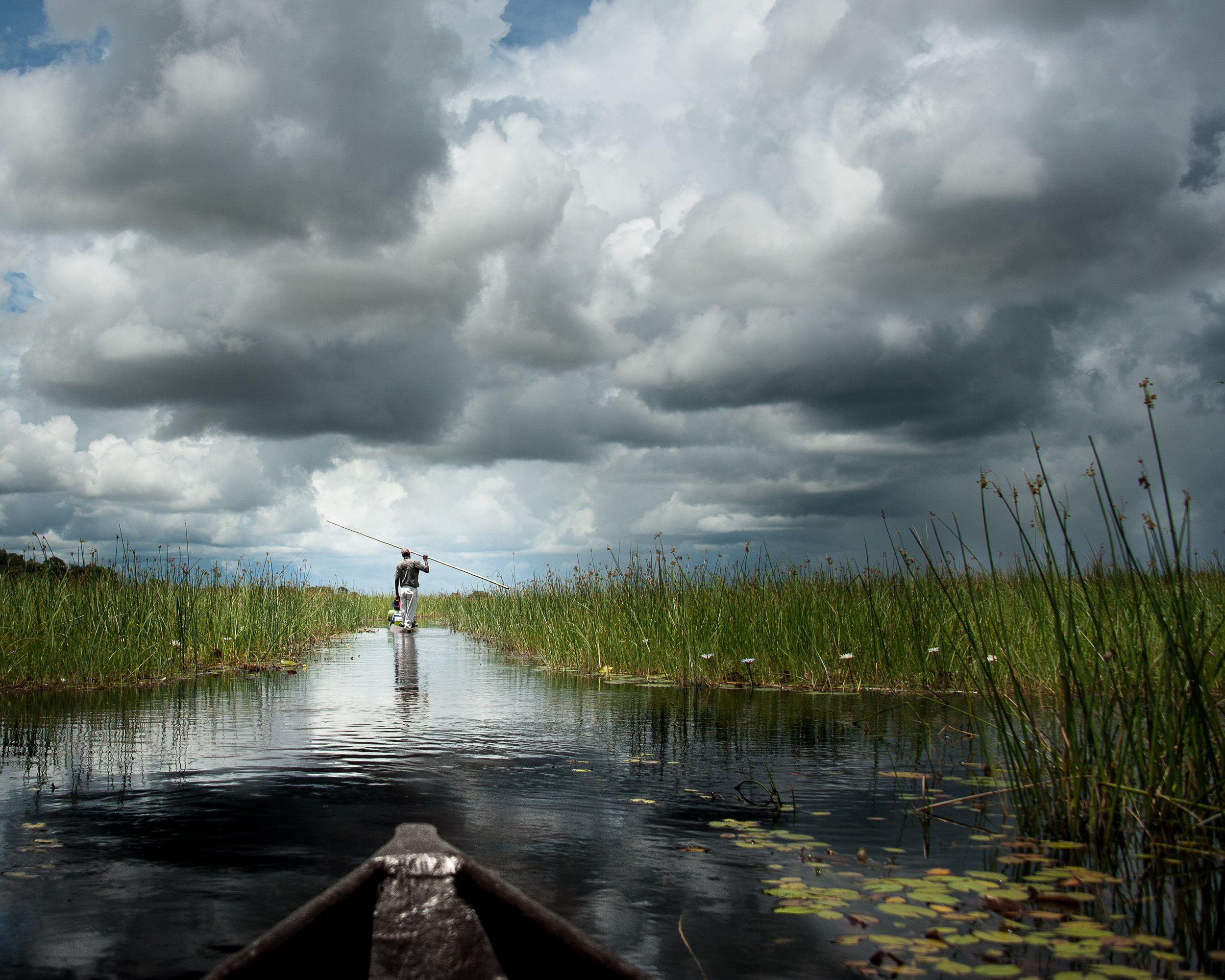 """Looking Forward at the Cross-way""  Photographed by Ron Foster              Okavango Delta, Botswana, Africa"