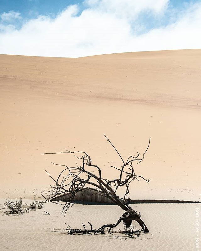This Week's Images Series Namibia: Land of Landscapes - Title: Peeking Through the Sands Photographer Ron Foster Namibia, December 2016 * Some of the most spectacular landscapes on the planet are located in the great country of Namibia. Once it was called West South Africa but gained its independence in 1990.  Tourism has increased over the last decade. It is one of the most fascinating places I have traveled to Africa to date. Here are the images I have captured during my time spent there. Enjoy!❤ * * What are some of your favorite landscapes on our planet? Let's create a list for others. * * * * #sanddunes #dunes #africa #thisweeksimagesseries #shotzdelight #namibia #landscapephotographer #awesome_earthpix #earhofficial #yourshotphotographer #earthexclusive #landscapes #lonelyplanet #planetearth #rometheplanet #earthescope #allnatureshots #discoverearth #earthpix #exploreeverthing #igrepresent #ourplanetdaily #lifeofadventure #wildernessculture