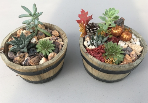 PlantNite3.jpeg