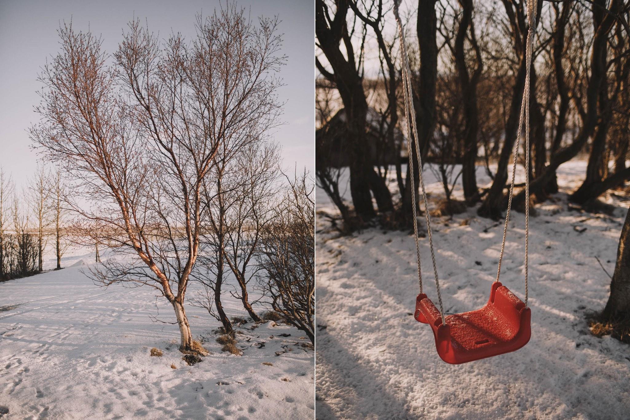 Road-trip-Islande-Iceland-Voyage-Travel-Portrait-Jérémy-Boyer-Sunny-day-dog-snow-5.jpg