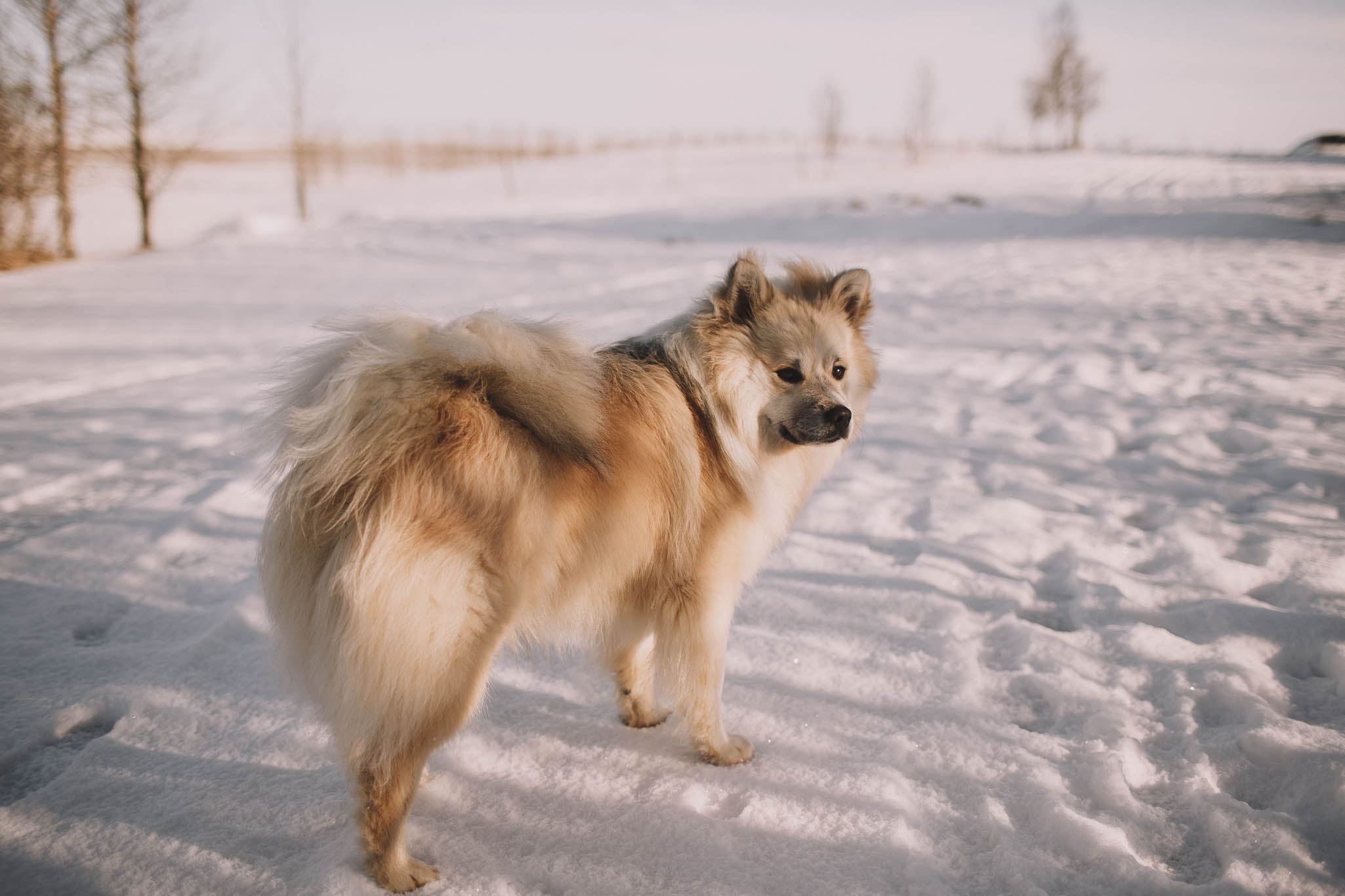 Road-trip-Islande-Iceland-Voyage-Travel-Portrait-Jérémy-Boyer-Sunny-day-dog-snow-11.jpg