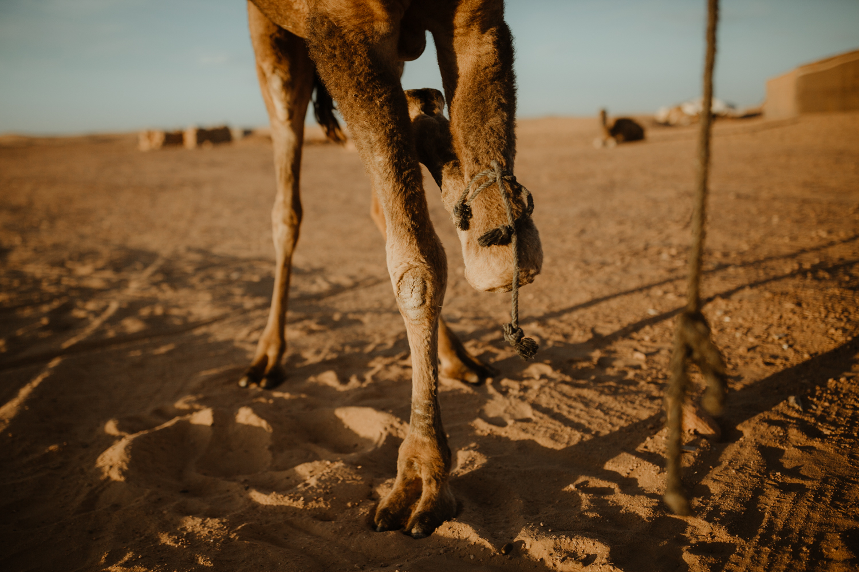 desertcamp-31.jpg