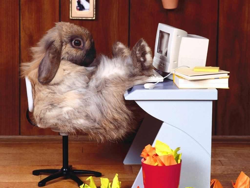 funny-rabbit_157499-1600x1200-1024x768.jpg
