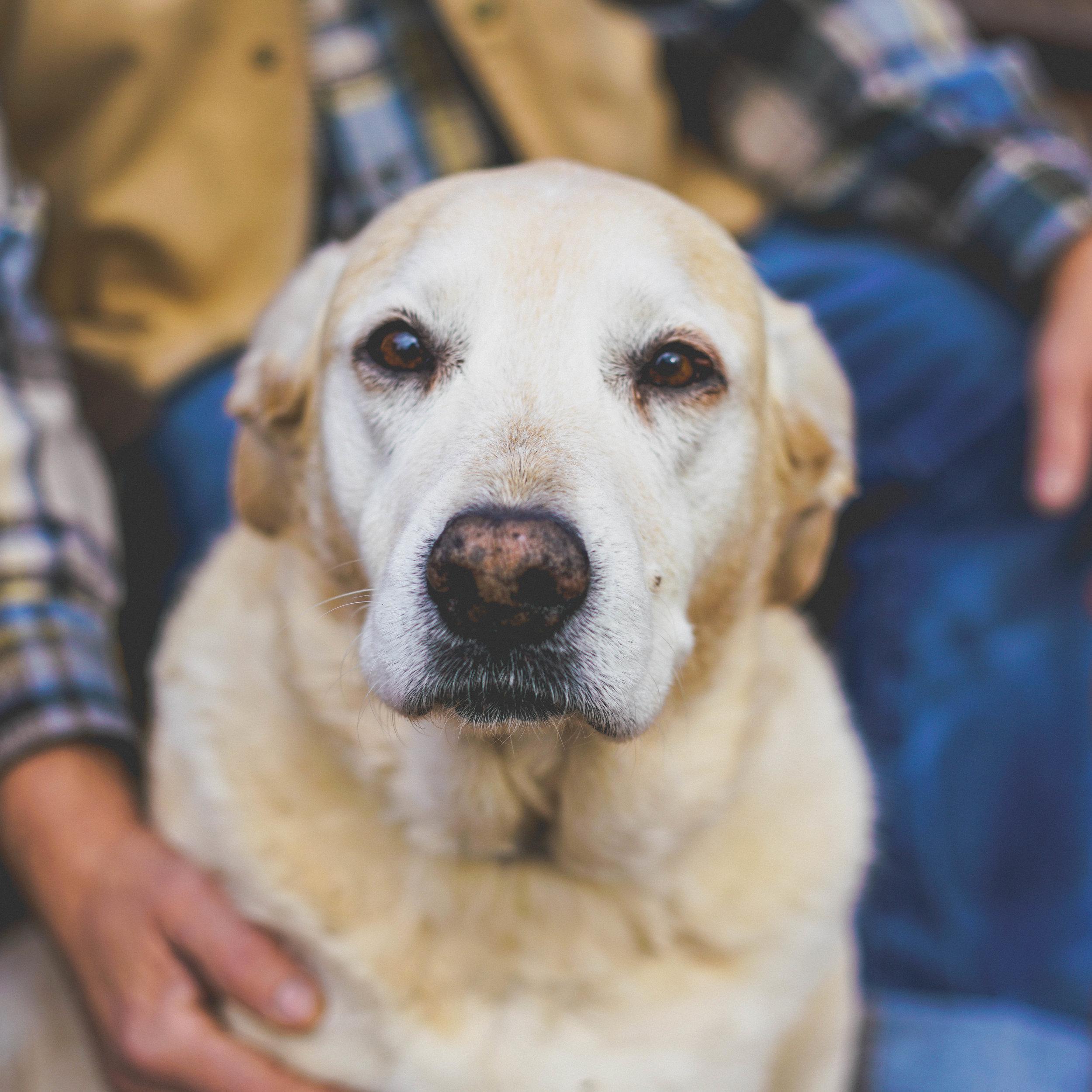 Yellow Dog-7933.jpg
