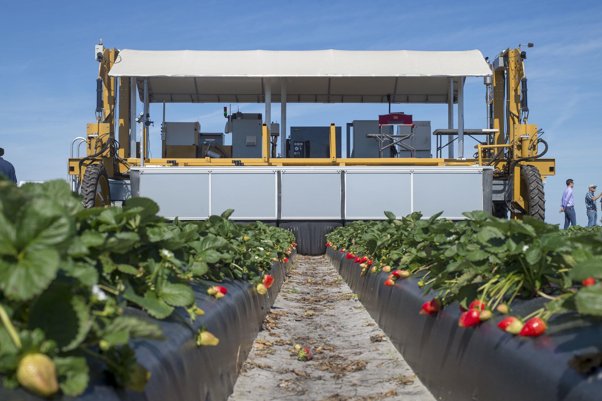 Man vs. machine - The Prize? Strawberries.