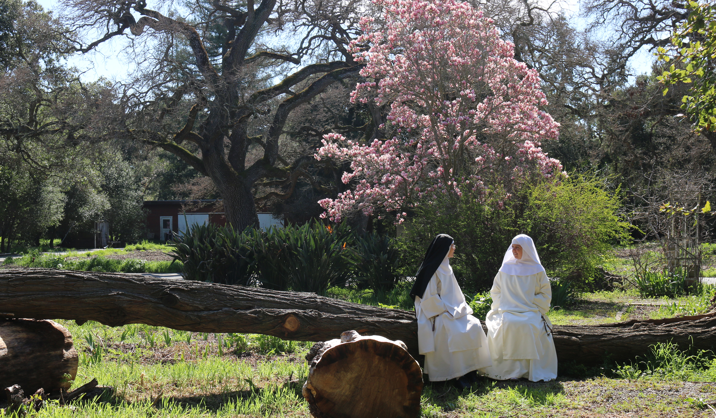 is jesus calling you? - Think you might be called to give yourself to Jesus and His mission as a Dominican nun? Come and see.