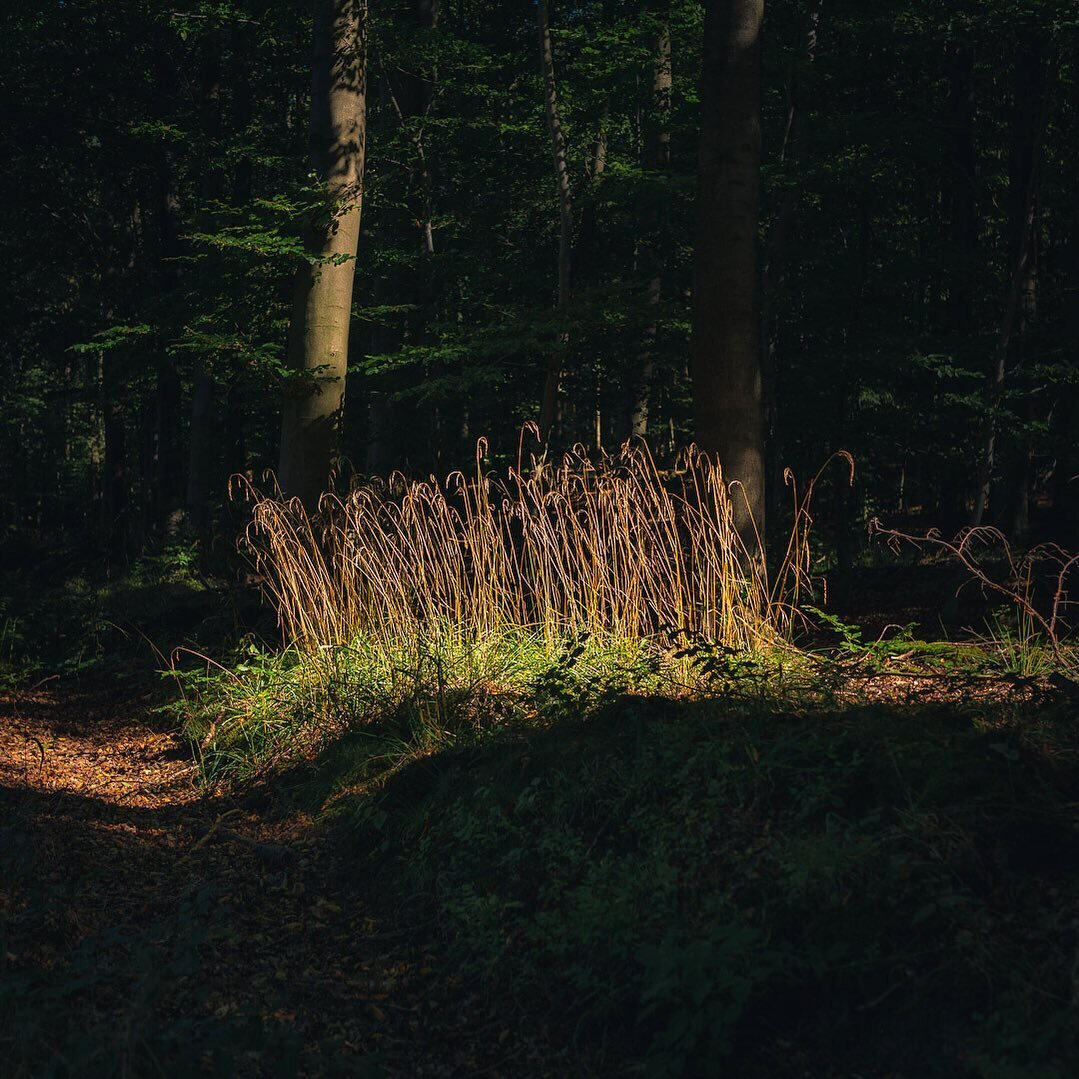 Sun ray in the woods