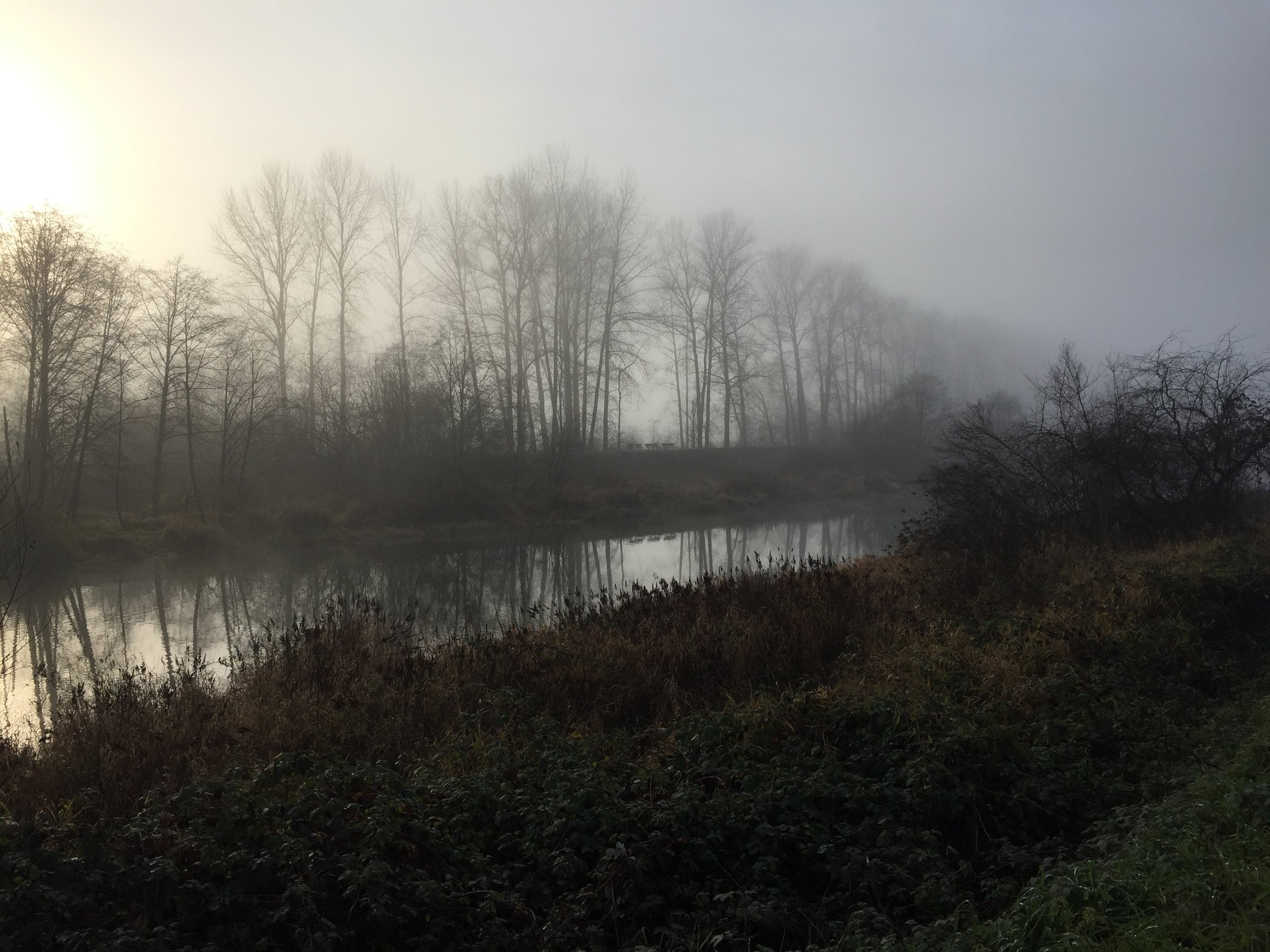 World Childless Week Tanya Trusler - Lost in the Fog.jpg