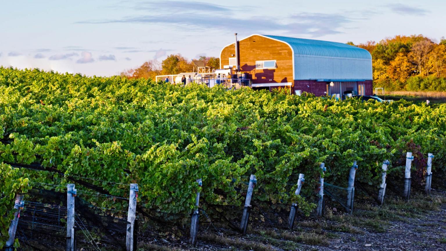 Norman Hardie wines.jpg