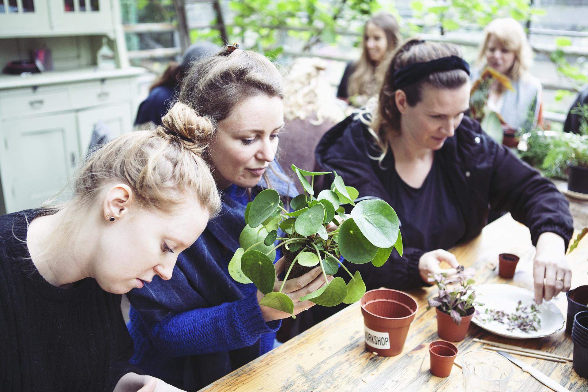 Stekjes Workshop Mama Botanica_04.jpg