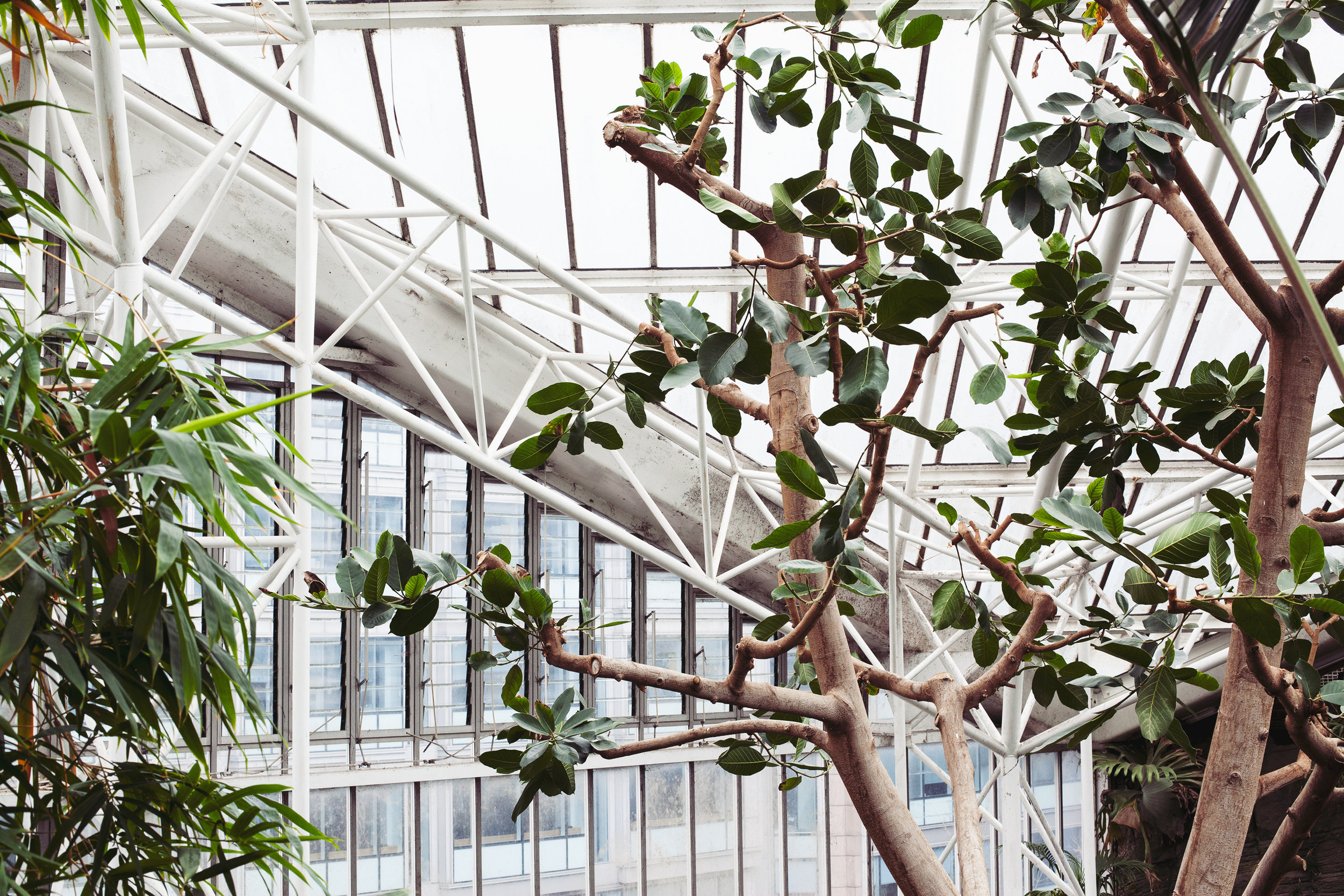 Barbican Conservatory Mama Botanica_16.jpg