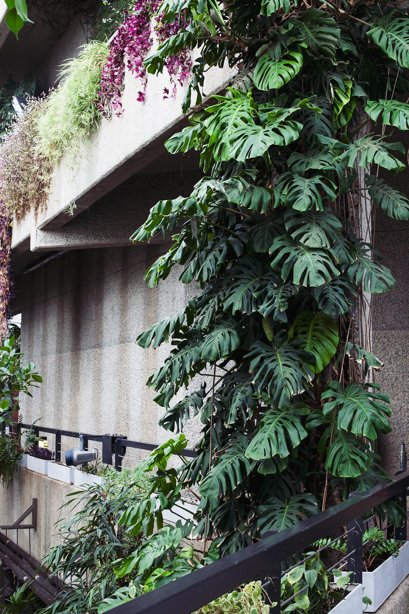 Barbican Conservatory Mama Botanica_15.jpg