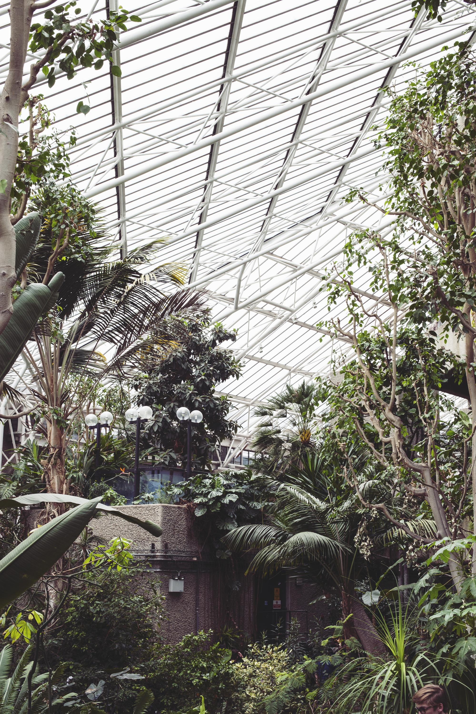 Barbican Conservatory Mama Botanica_09.jpg