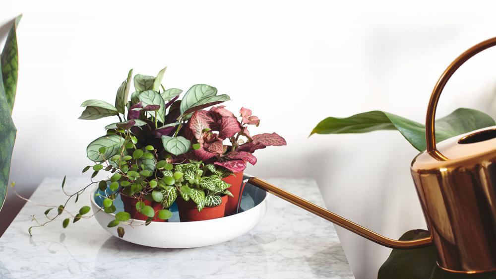 kleine plantjes.jpg
