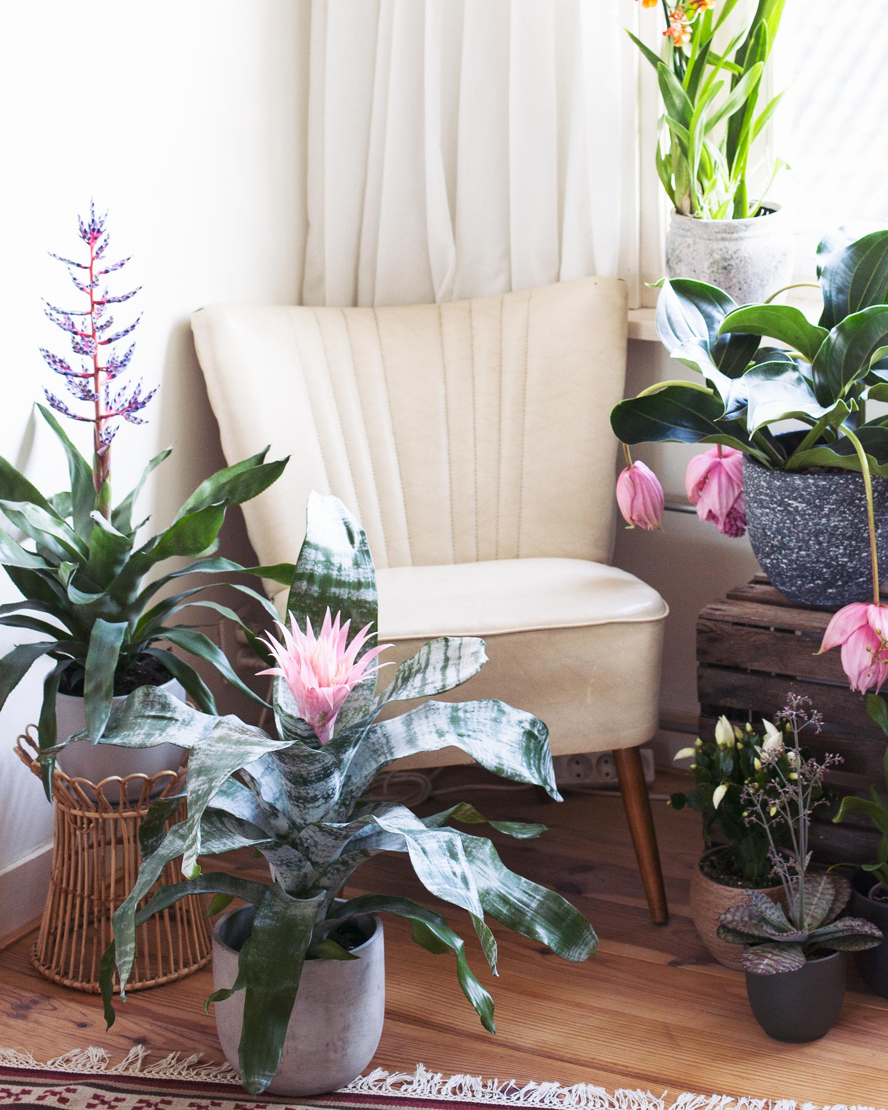 Blog-Bloeiende-Planten_Mama-Botanica_02.jpg