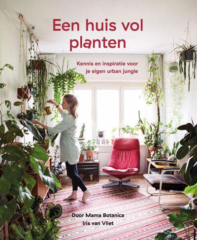 Alles Over Planten In De Badkamer Mama Botanica