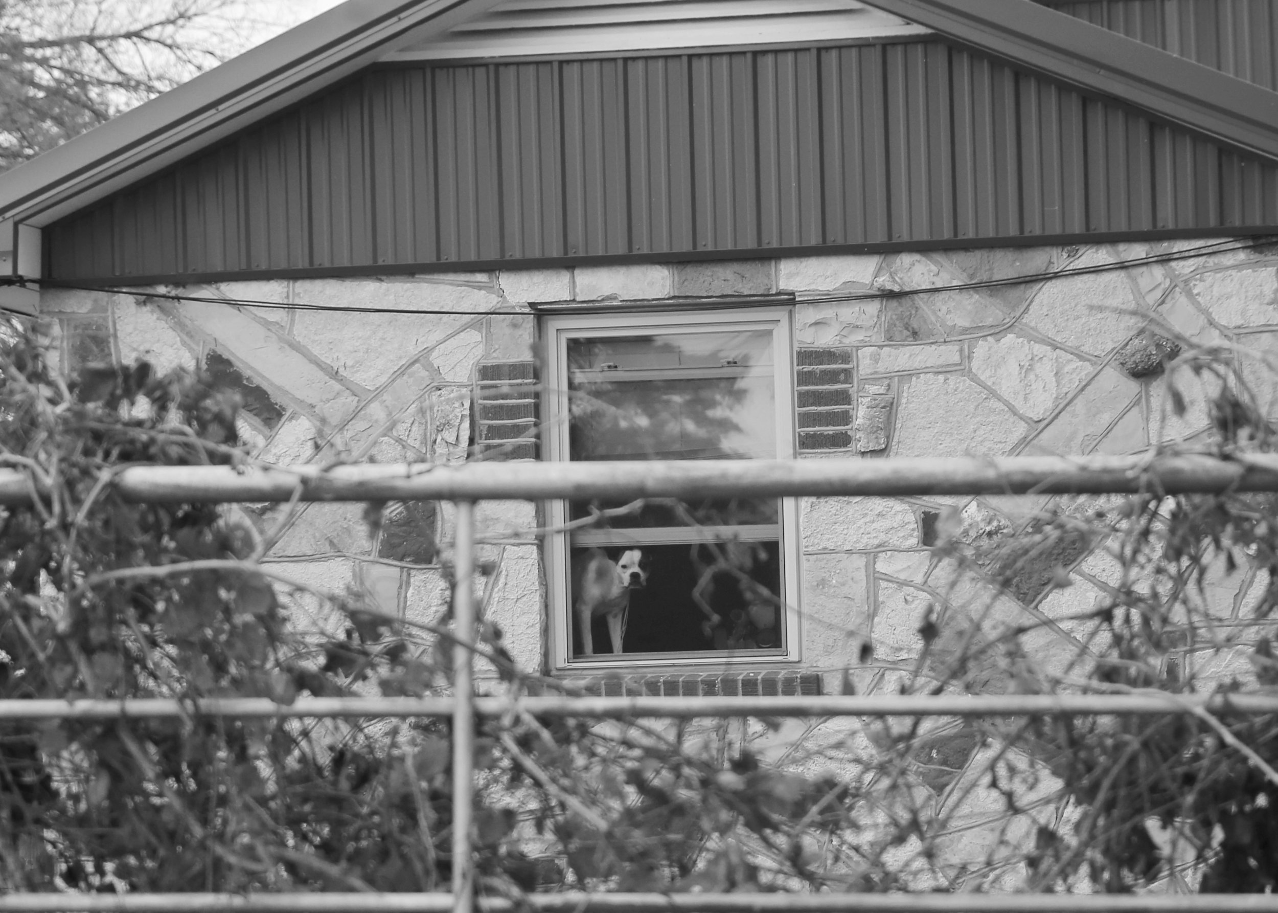 Look closely at the window ... she was keeping an eye on us during a session I had last fall!