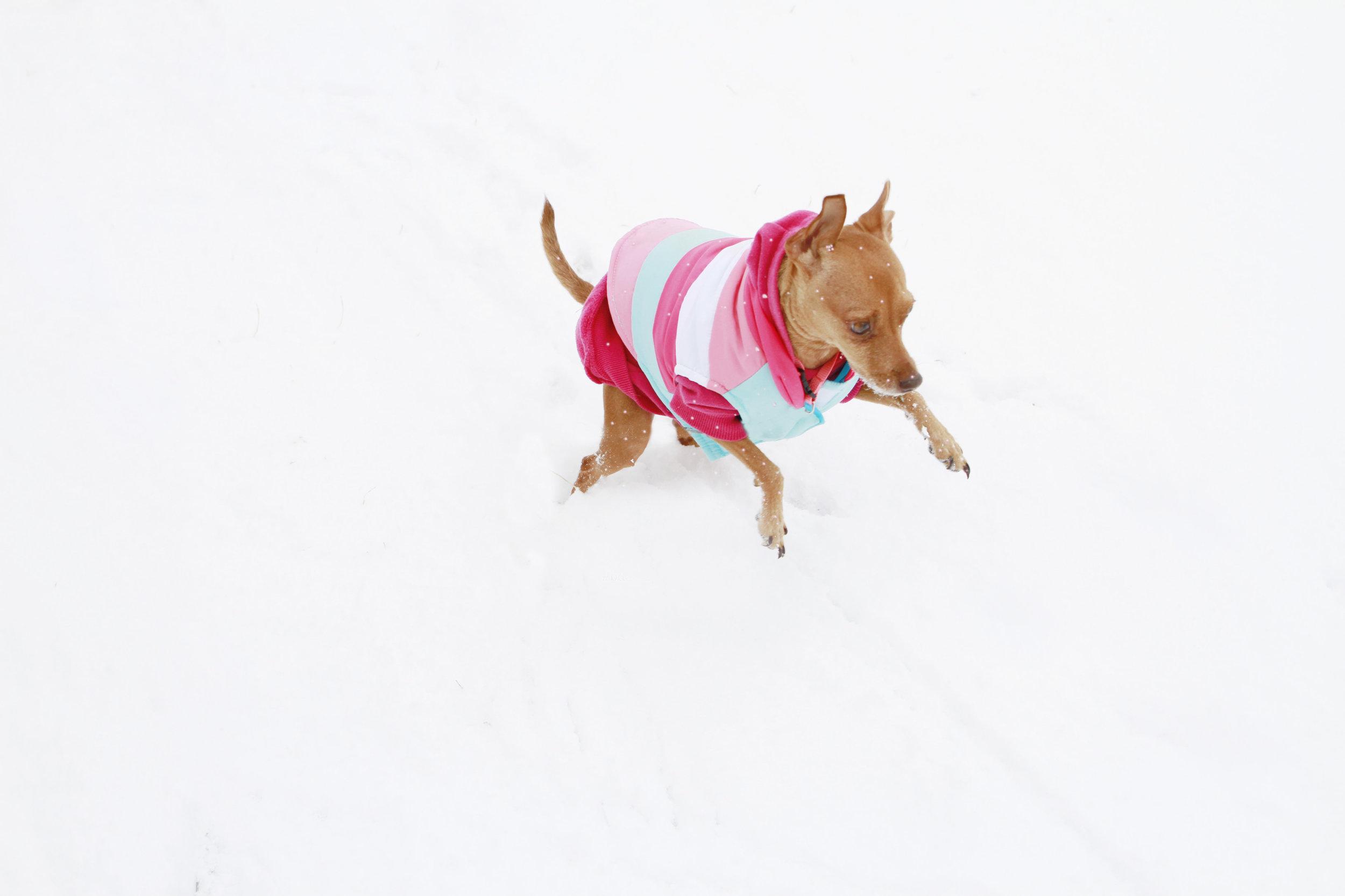 lucy_snow.jpg