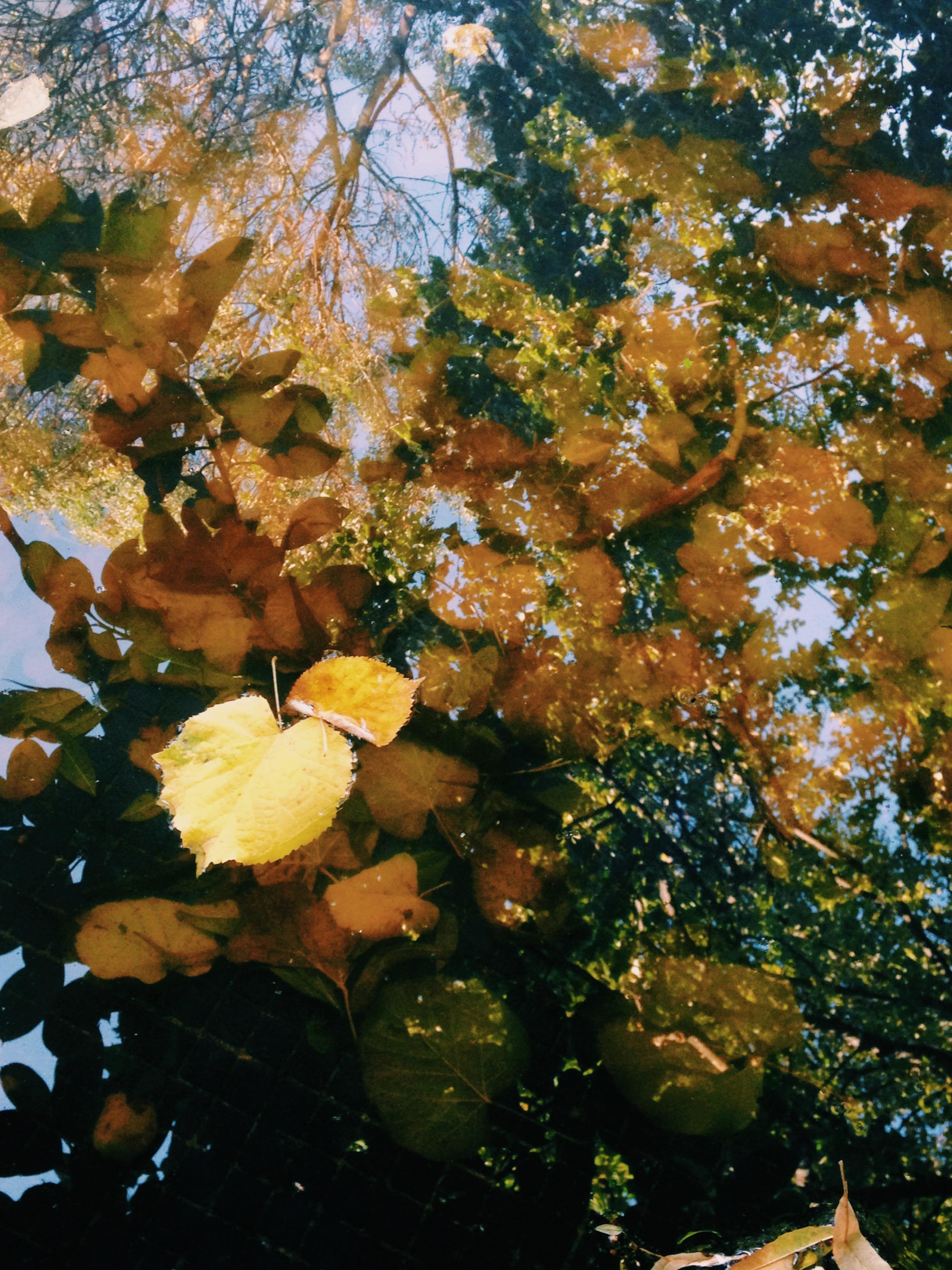 2014-10-30 15.50.45-1.jpg