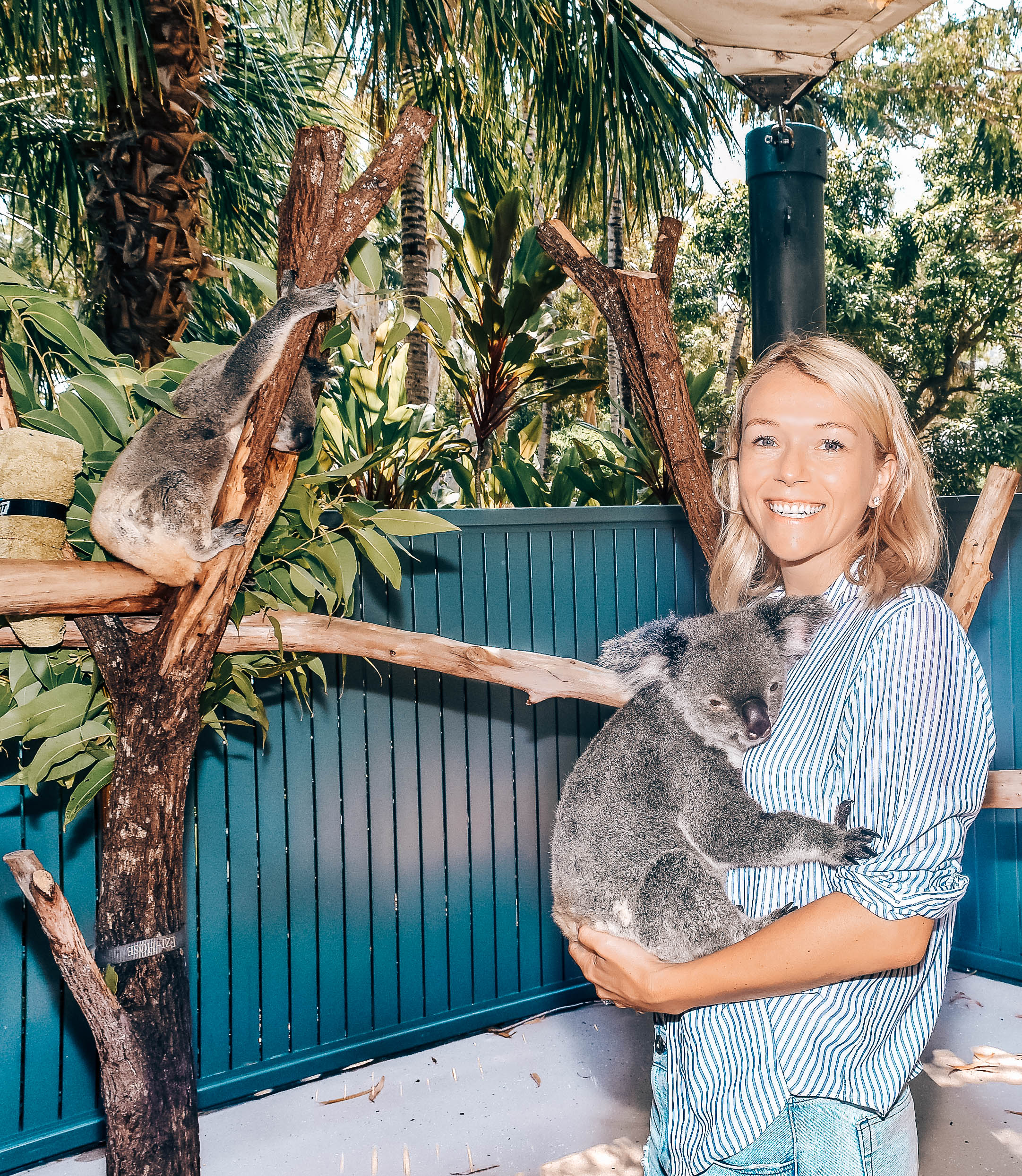 Koala Cuddle at Wild Life Cafe Hamilton Island