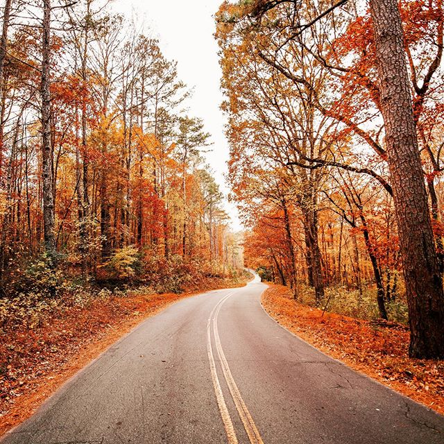 "What will the Lord put in your path as you walk more closely with Him?? 🍁🍂🙏🏼 Link in bio for info about our Fall Retreat, titled ""An Invitation to Trust"". ""Trust in the Lord with all your heart, and do not rely on your own insight. In all your ways acknowledge him, and he will make straight your paths."" Proverbs‬ ‭3:5-6‬ ‭  #catholic #youngadultcatholic #fallretreat #trustinthelord #proverbs3 #fall #prayer #JesusIsLord #trust #youreinvited  Photo credit:  @gcalebjones"