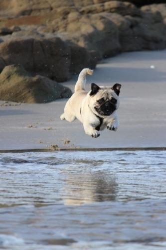 bruce-galpin-dog in air jumping in water473580-unsplash.jpg