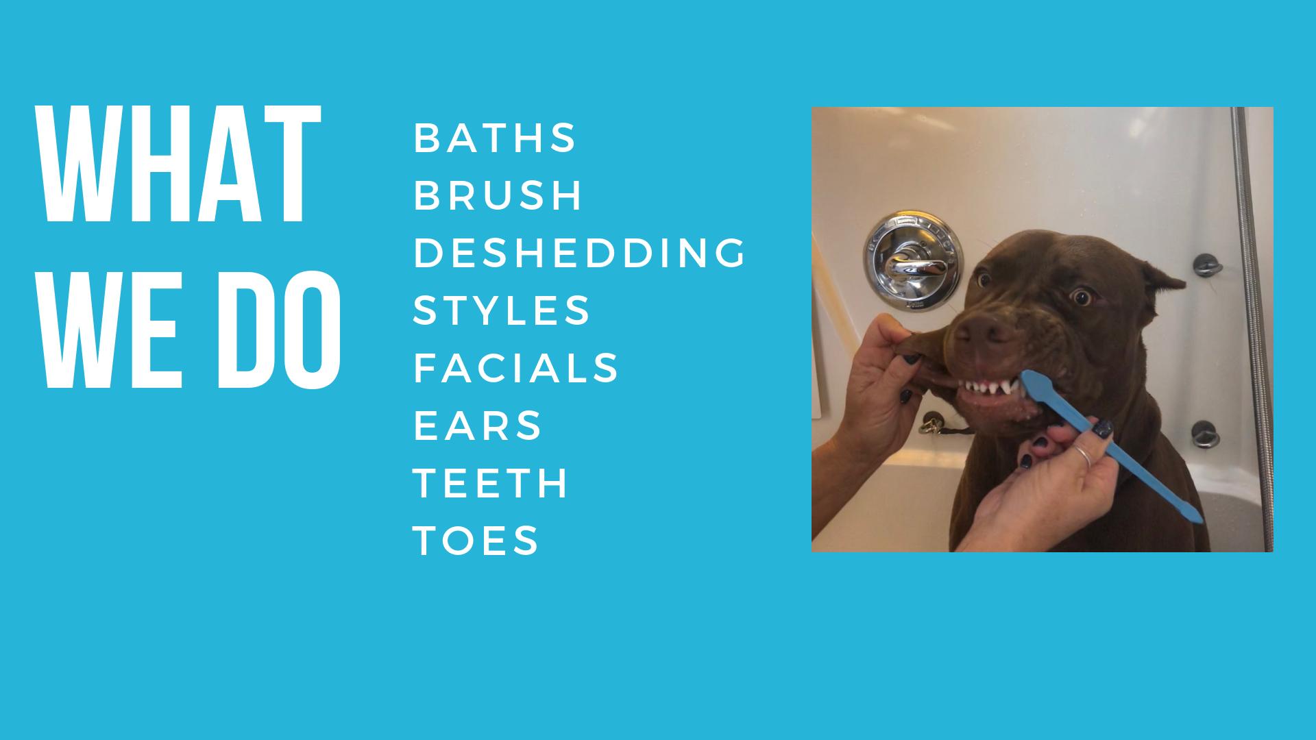 What we do calidog teeth brushing.png