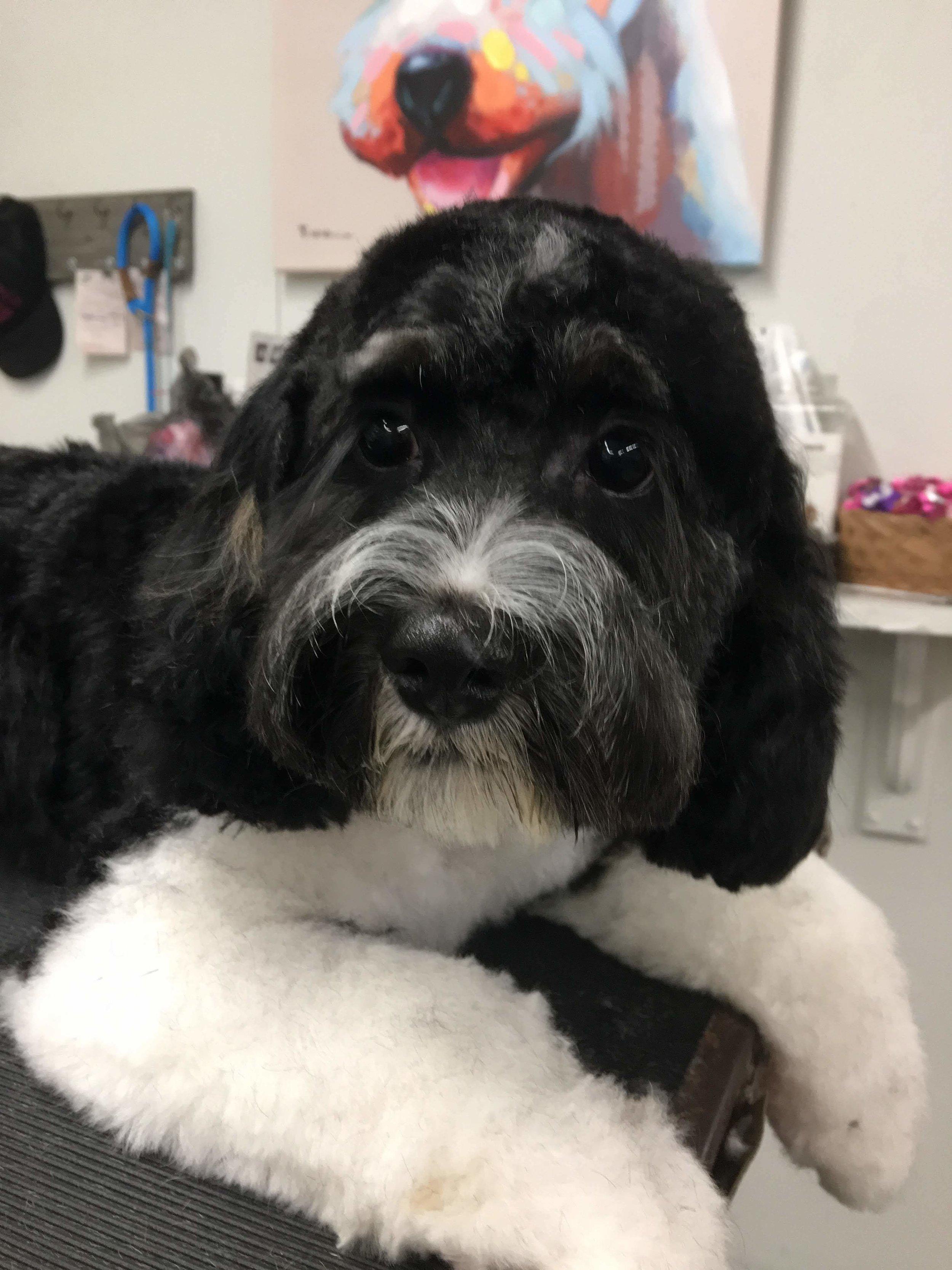 calidog pup grooming mobile.JPG