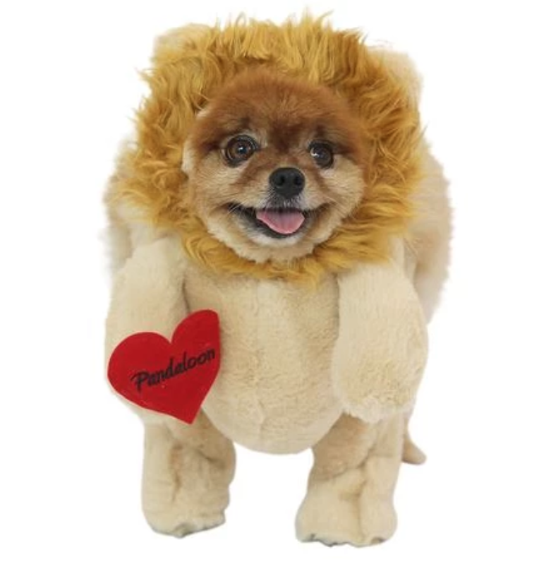 Lion Dog - Pandaloo Lion Dog Costume. This adorable costume will have everyone doing a double take...is it a pup or a lion? This full length hoodie costume is made with soft plush fabric and features reinforced feet as well as Velcro and drawstrings to give your dog the perfect fit. Your pup will be able to walk around in this costume with ease.Sizes available are small and medium.