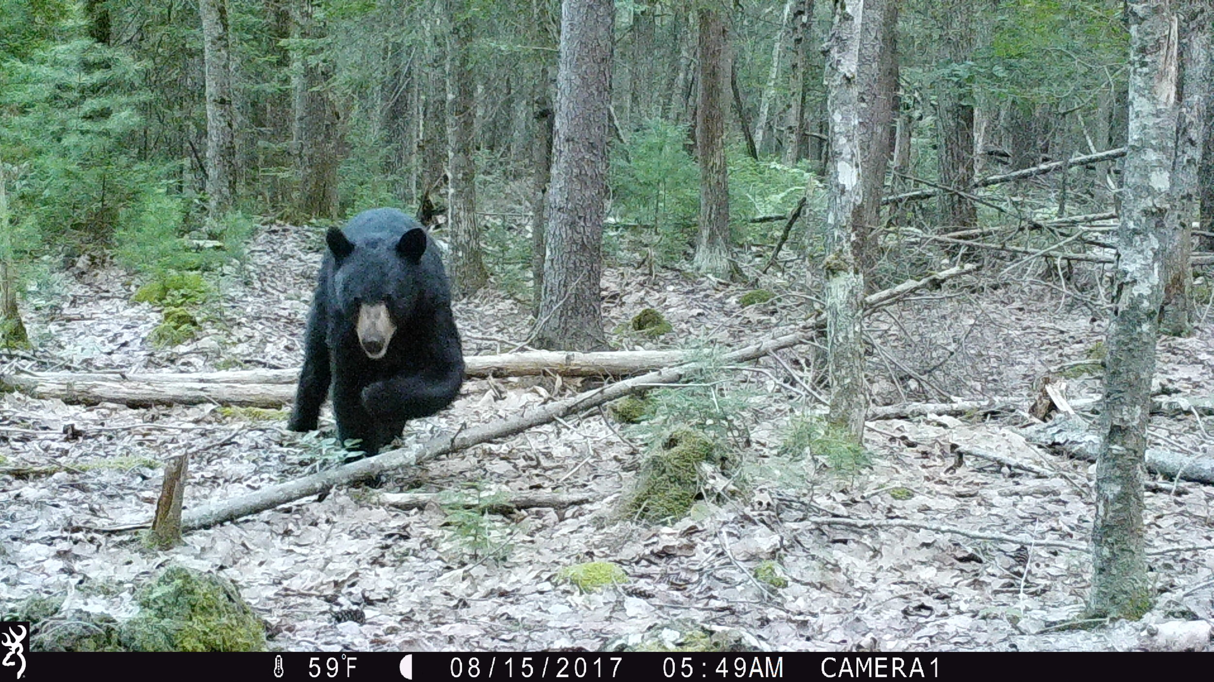 game camera property management - Learn about the wildlife that inhabits our state and find out whats in your woods.
