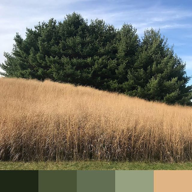 🍃🍂 . . . . . . . . . . . #colorswatch #colorsofny #igcolors #ig_colors #ig_nyc #newyork #nyc #ny #colors #design #inspiration #swatch #colours #cores #bright #color #igersofnyc #ig_kids #instagood #instadaily #instaoftheday #iphonephotography #iphonephoto #colorsofinstagram #swatches #colorscheme
