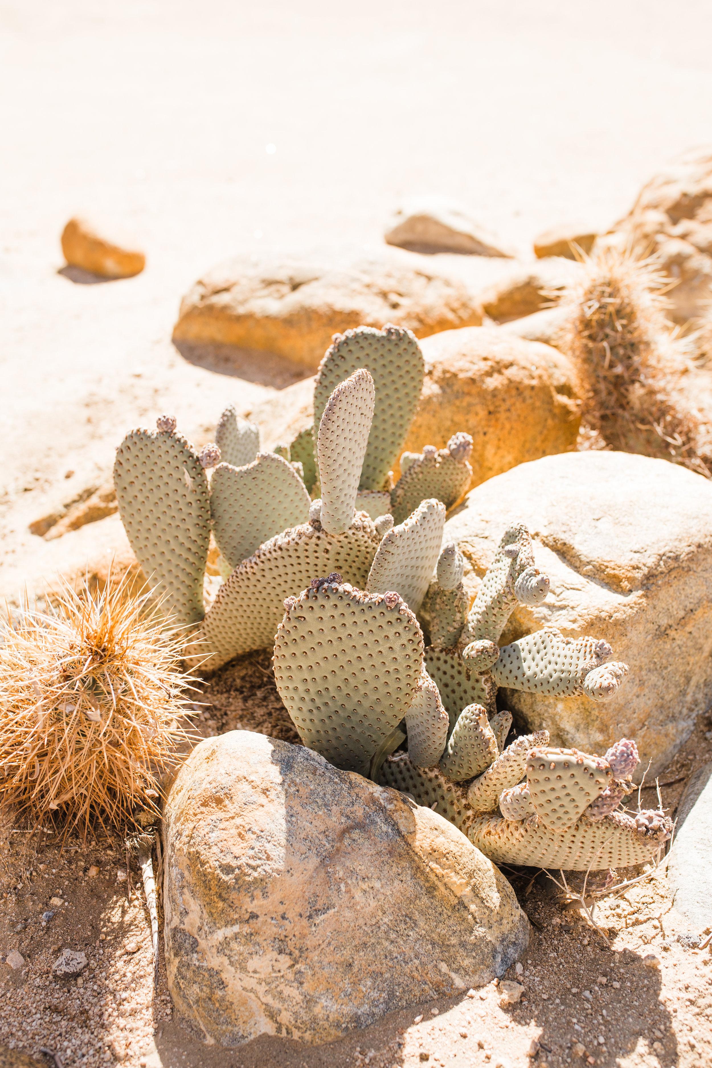 desertromantics-6.jpg