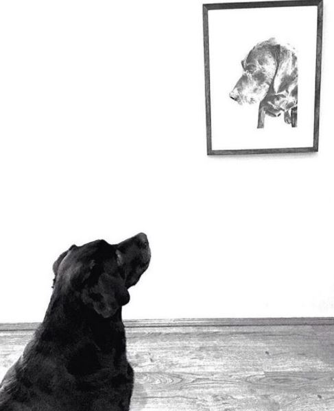 Pet portraits image.JPG